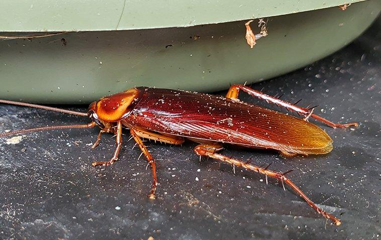 a cockroach out by a plant pot