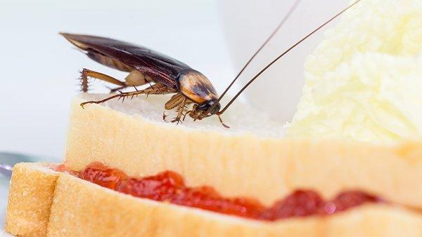 a cockroach on a sandwhich