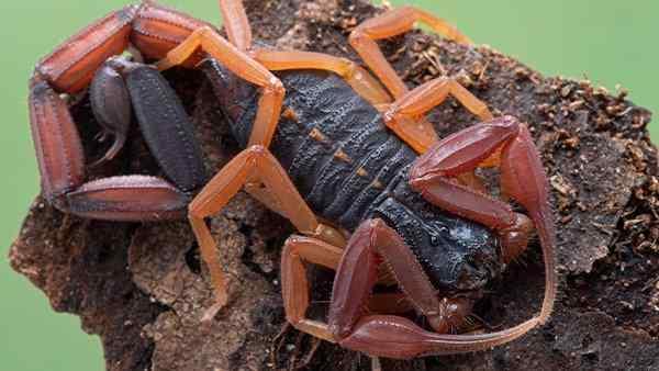 scorpion on rock