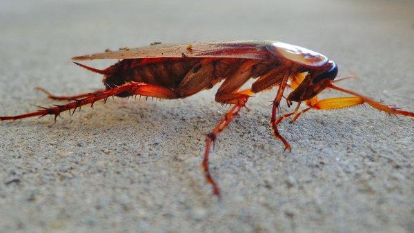 cockroach crawling on concrete