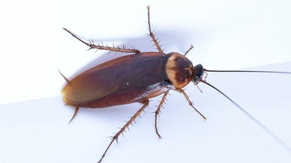 a cockroach crawling in a kitchen