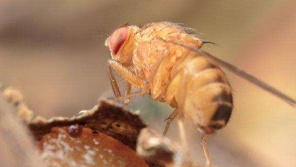 a fruit fly on the trash