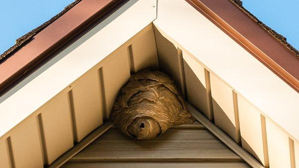 a hornet nest in the peak of a roof