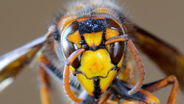 a hornet on a branch
