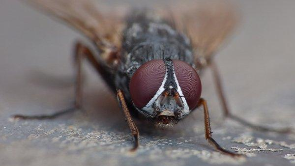 house fly on a kitcken counter