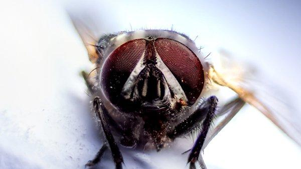 a house fly in a kitchen