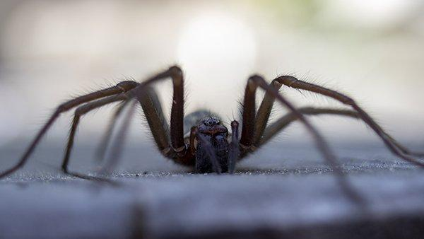 house spider crawling near a house