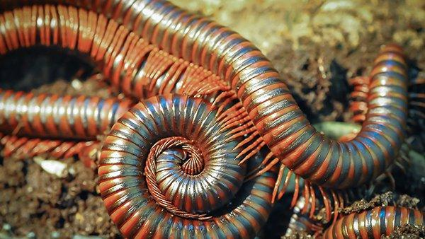 millipedes crawling on dirt