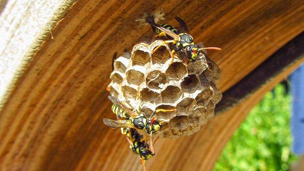 a paper wasp on a nest