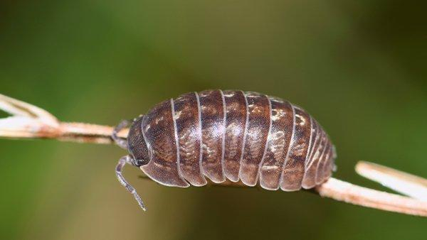 a pill bug on a plant