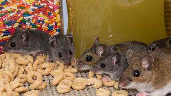 a rodent infestation in a kitchen