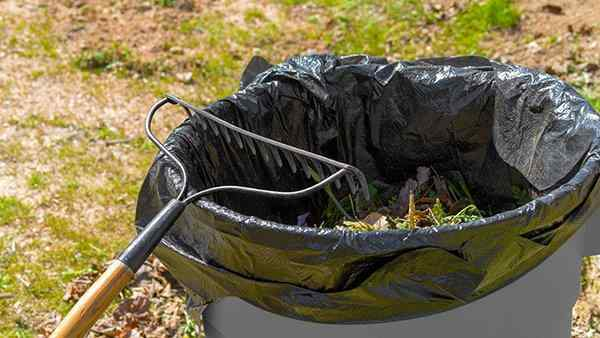 spring cleaning a yard for pest prevention
