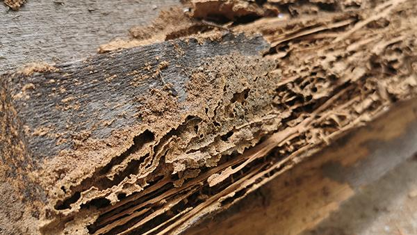 damaged wood from termites