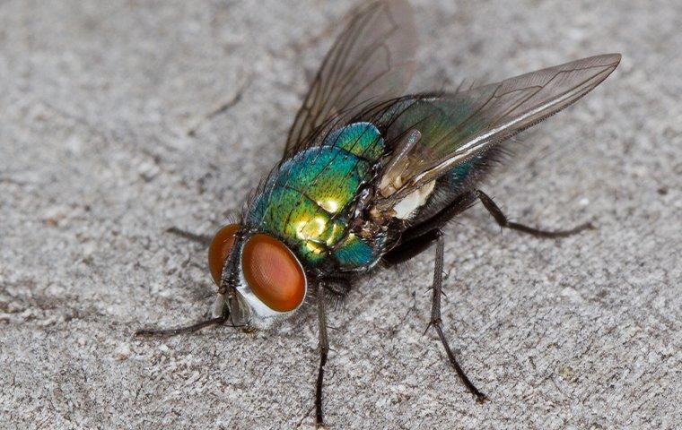 blow fly on cement
