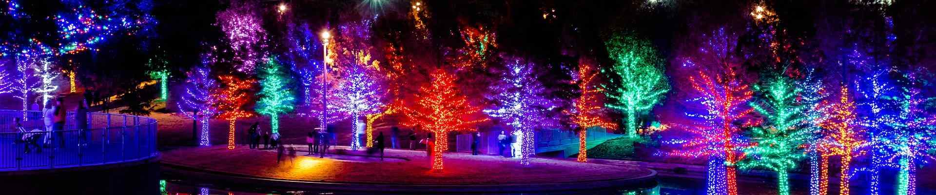 a row of trees in a park lit for the holidays in addison texas