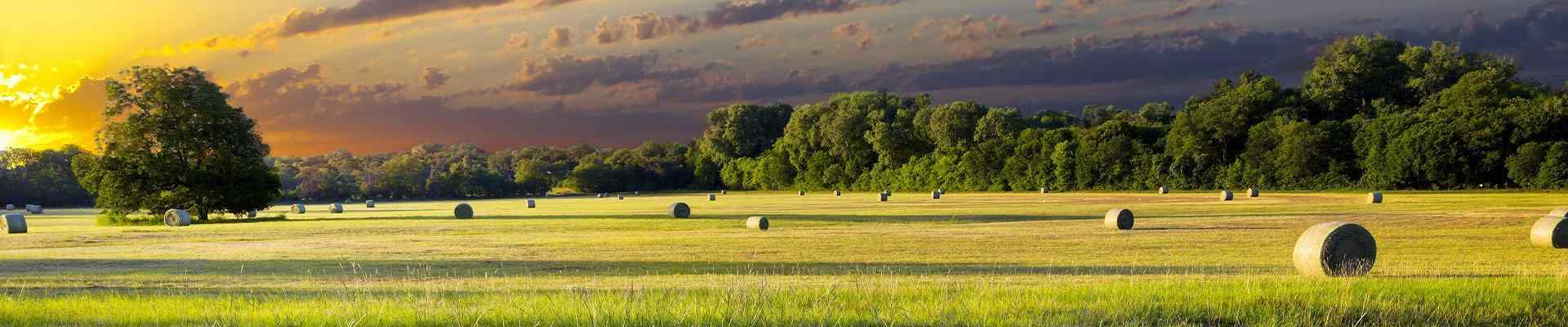 a field with bales of hay in bartonville texas