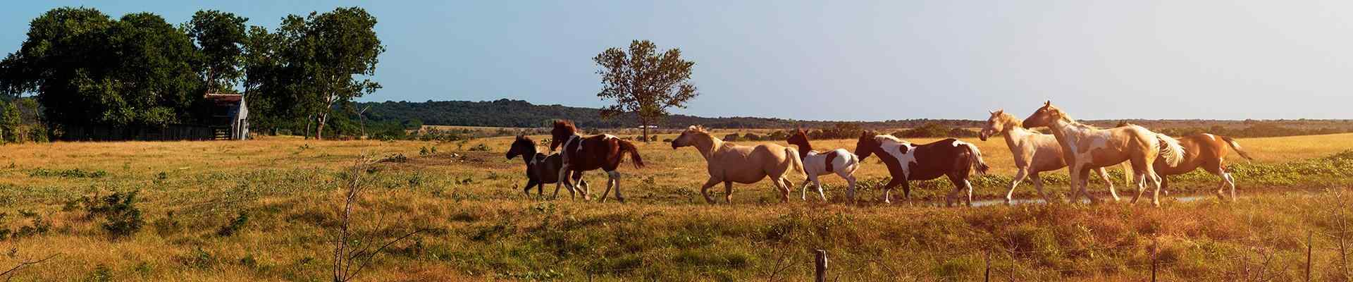 a field with horses in blue mound texas