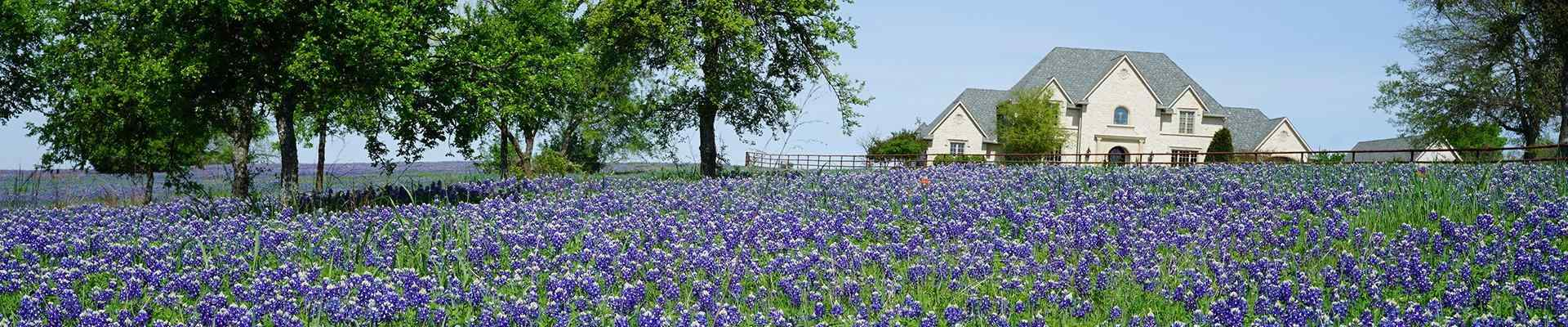 a home and field of blue bell flowers in cross roadstexas