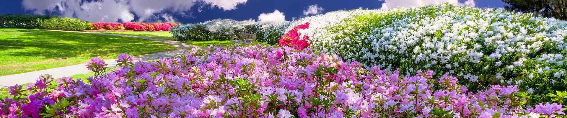a garden of flowers in a park in highland park texas