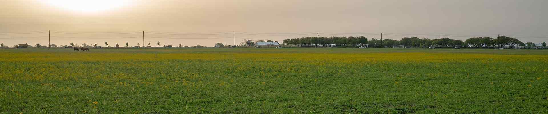 large open field in murphy texas