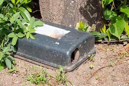 a rodent station outside home
