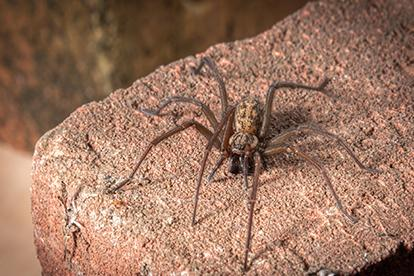 house spiderr sitting on a rock