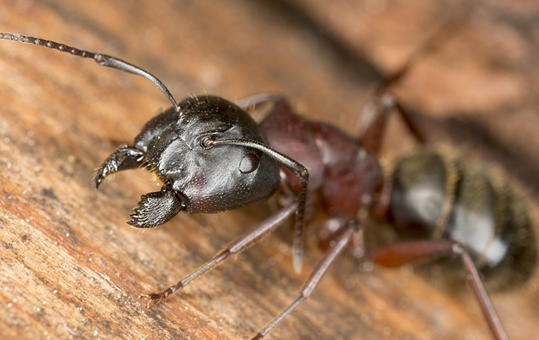 an ant on wood
