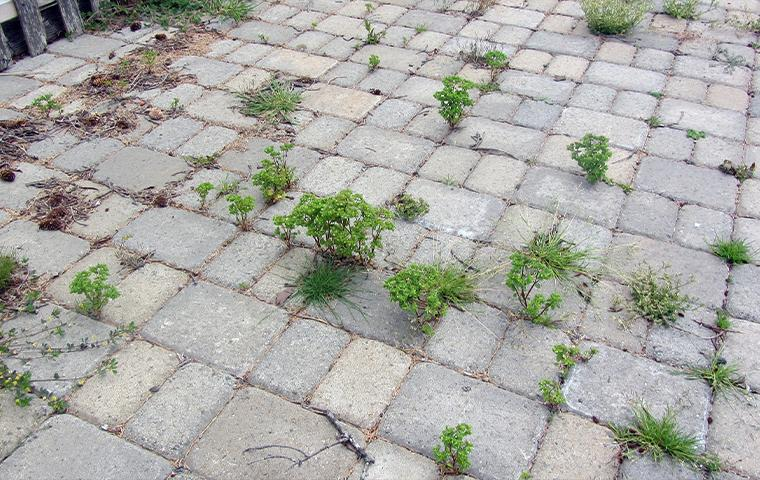 weeds growing through the pavement