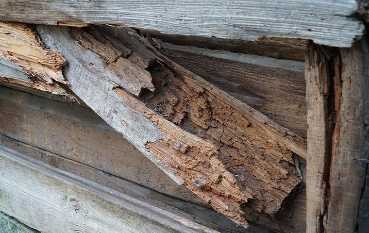 close up of damaged wood