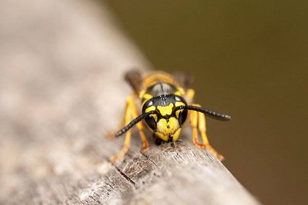 a wasp crawling on wooden patio furniture
