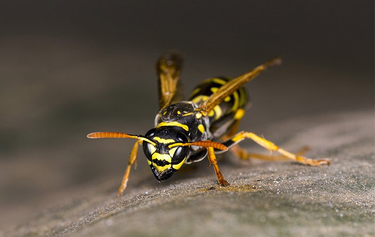 a wasp on wood