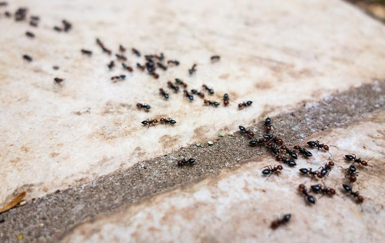 ants marching on tiles