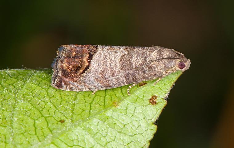a moth on a green leaf