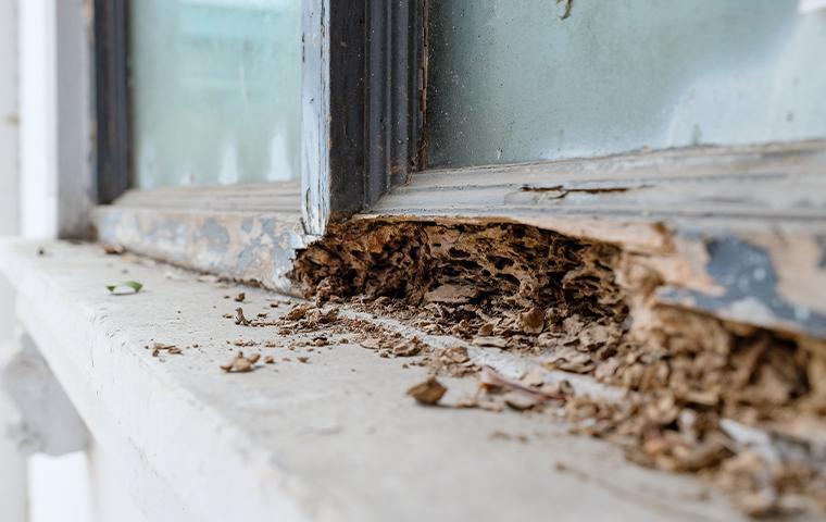 termite damage on a windowsill