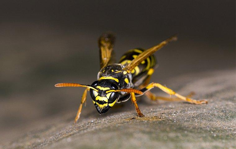a wasp up close