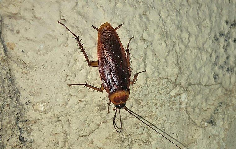 a cockroach crawling down a cement wall