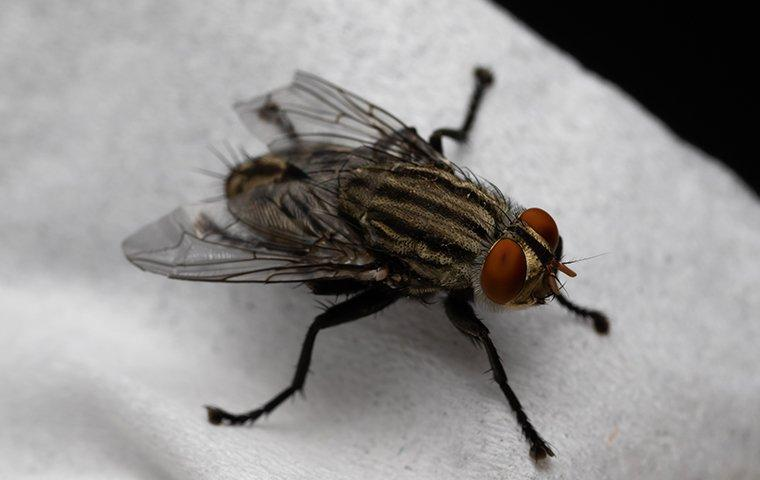 a house fly crawling on cloth in a kitchen