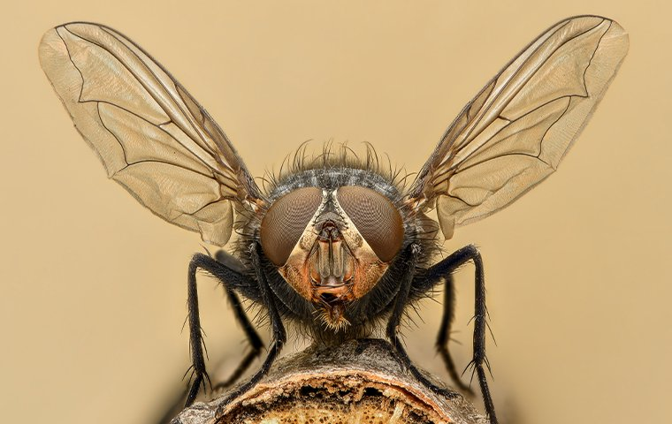 a housefly perched on a surface