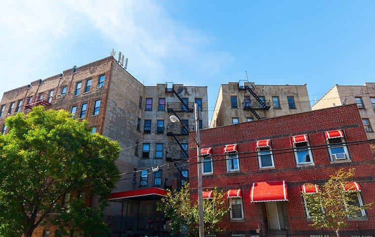 a row of housing complexes in bronx new york