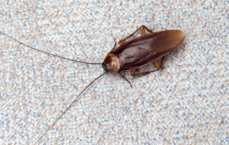 a cockroach crawling on the floor of a home in bronx new york