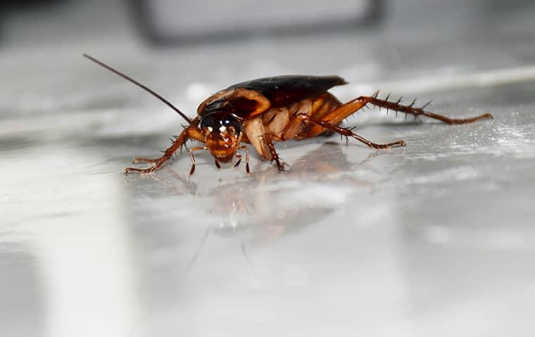 an american cockroach crawling accross the white tiled floor in a tulsa oklahoma home