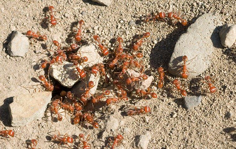 ants crawling on rocks