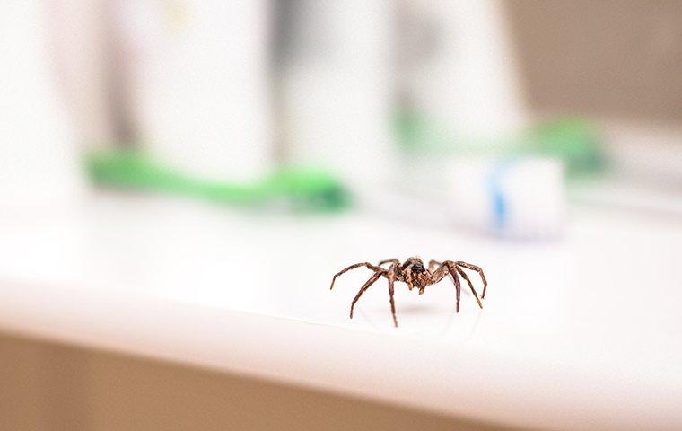 a house spider crawling on a bathroom sink