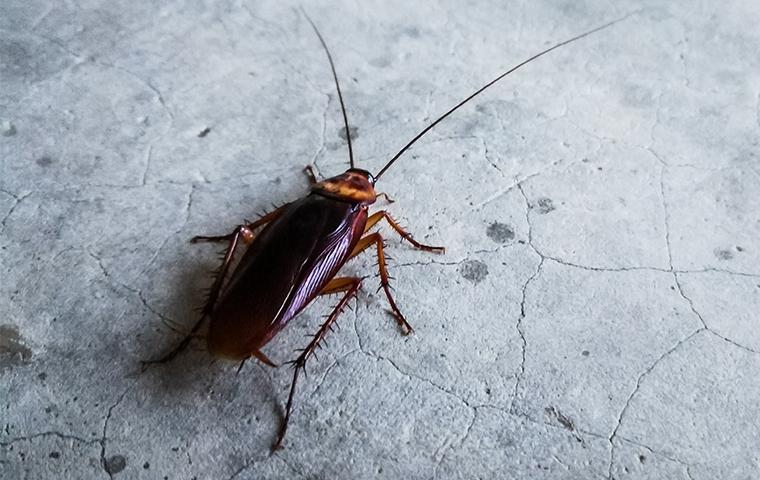 a cockroach inside a home in rogers county oklahoma