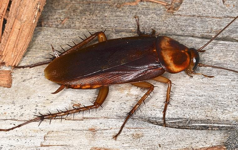 a cockroach crawling inside a home in grove oklahoma