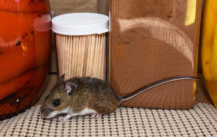 a rat inside a home in craig county oklahoma