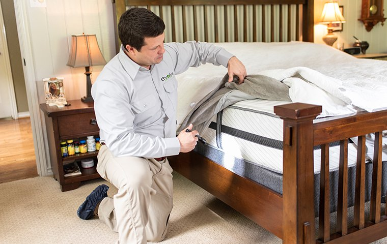 a pest control service technician inspecting a bedroom for bed bugs inside of a home in las vegas nevada