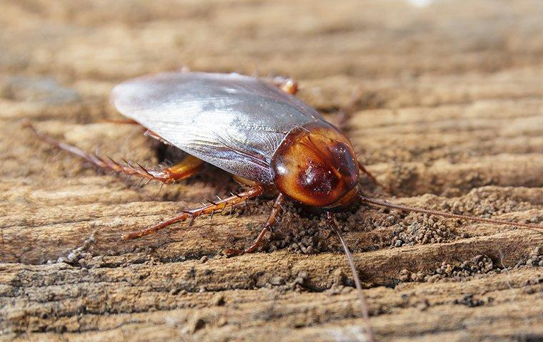 cockroach in home