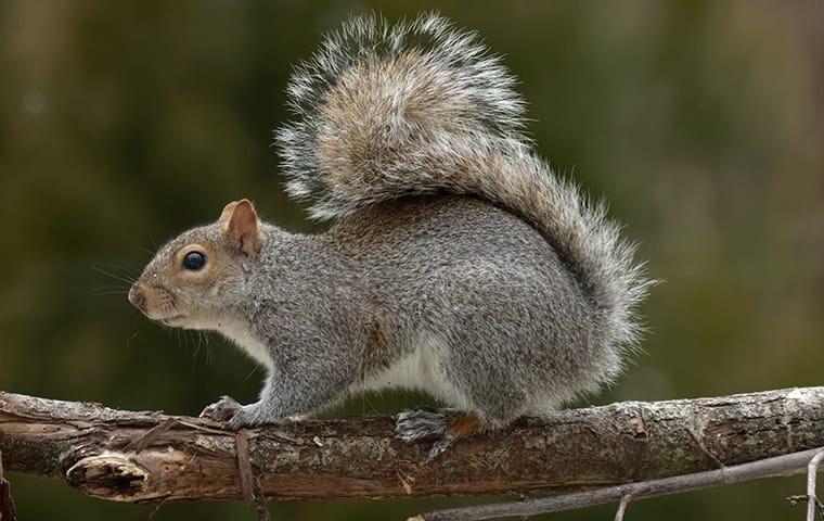 a squirrel on a tree branch outside of a home in memphis tennessee