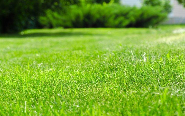 green healthy lawn in yard